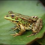 Portuguese startup uses frogs in Covid fight