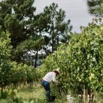 Biological wine producer sees exports boom
